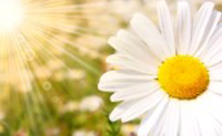 Il fiore e il sole
