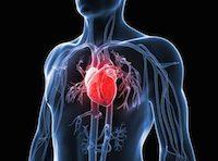 Rischi cardiovascolari
